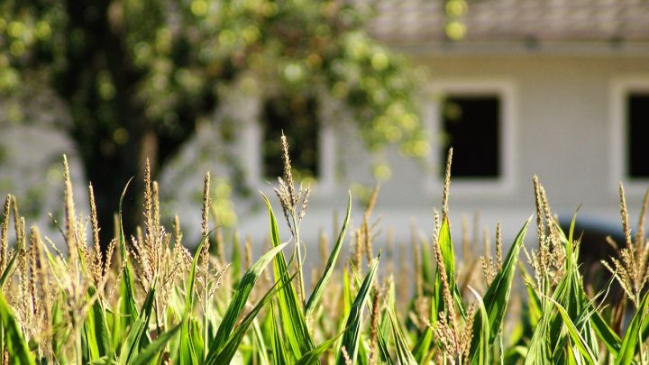 Funkcjonalne i nowoczesne hale dla rolnictwa